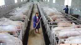 最近有些養豬戶也開始擔憂了,一些地方開始清理不大合格養豬場來避免傳播,你怎麼看?