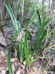 自來水澆蘭花鹼性很大,用硫酸亞鐵、過磷酸鈣溶解改善土壤PH,對花有沒有影響?