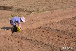 許多人種花生時在上面壓土是起的什麼作用?