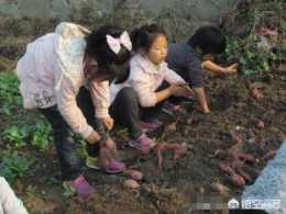 身在城市裡的你會不會帶孩子,經常回農村,去感受那份淳樸和勞動的辛苦?